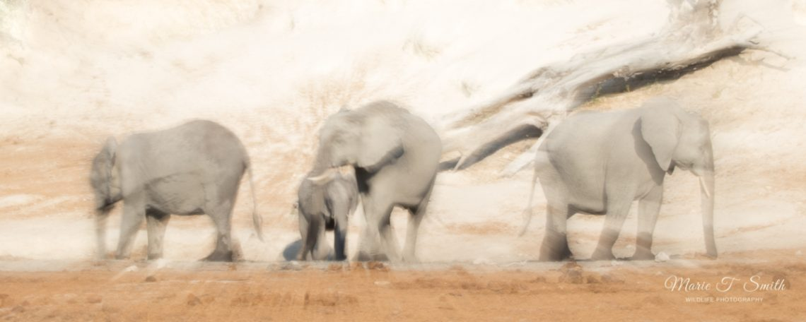 Intentional camera movement produces some great movement among thos elephant group and makes great fine art photographic images